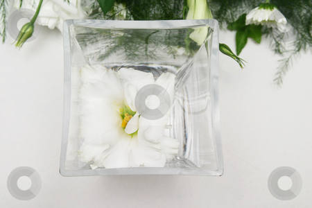 White Lilly stock photo, White lilly in a square vase by Sean Nel