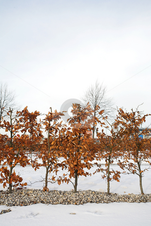 Munich #20 stock photo, Trees in Munich - Riem surrounded by snow.  Copy space. by Sean Nel