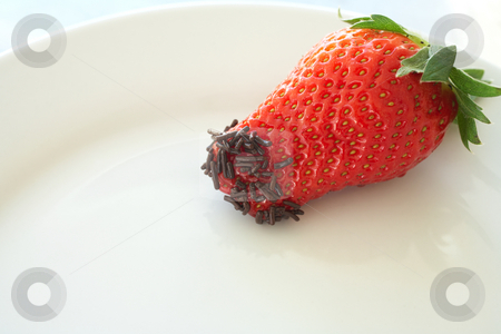 Strawberries and chocolate stock photo, Fresh ripe strawberry with small chocolate sprinkles served as a dessert - Shallow Depth of Field by Sean Nel