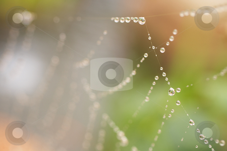 Spiders web stock photo, Water drops on a spiders web after early morning rain by Sean Nel