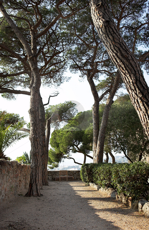 Park with trees in Cannes stock photo, Park with tall trees, bushes and walkway in Cannes, France by Sean Nel