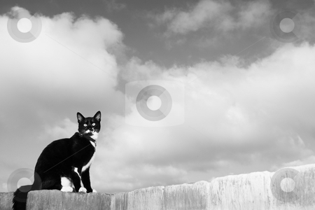 Cat #1 stock photo, A black and white cat sitting on a wall. by Sean Nel
