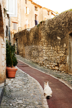 Village of St Paul stock photo, White cat sitting in an alleyway in the quaint little French hilltop village of Saint-Paul de Vence, Southern France,  Alpes Maritimes, next to the Mediterranean sea - A Heritage Site by Sean Nel
