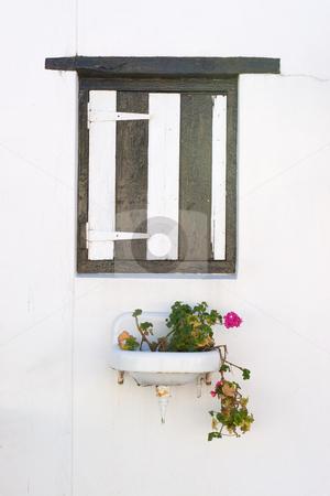Window #3 stock photo, Pink flowering plant in a basin under a wooden window shutter by Sean Nel