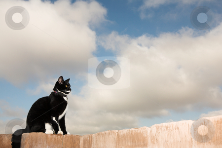 Cat #2 stock photo, A black and white cat sitting on a wall. by Sean Nel