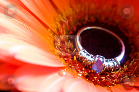 Jewellery #2 stock photo, Close-up of engagement ring on a daisy - shallow depth of field by Sean Nel