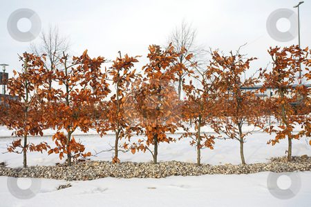 Munich #18 stock photo, Trees in Munich - Riem surrounded by snow. by Sean Nel