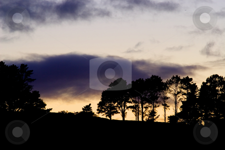 Silhouette #5 stock photo, Silhouette of trees at sunset by Sean Nel