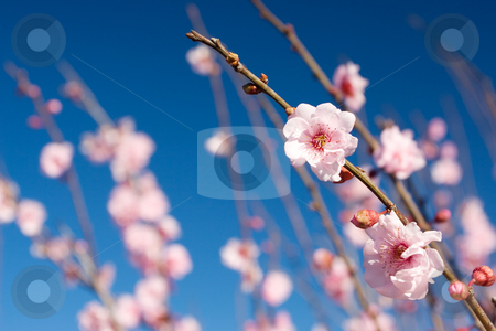 Flowers #4 stock photo, Pink flower blossoms - Shallow Depth of Field by Sean Nel