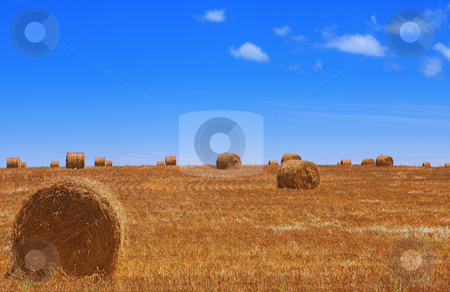 Haybales #1 stock photo, Rolls of gathered hay on the lands by Sean Nel