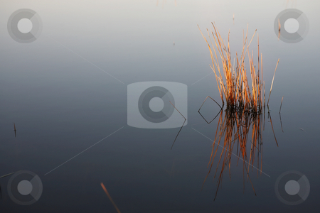 Flyfish #35 stock photo, Plant in a fly fishing dam. by Sean Nel
