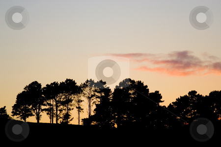 Silhouette #2 stock photo, Silhouette of trees, with clouds, at sunset by Sean Nel