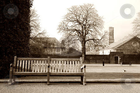London#8 stock photo, Bench in a park at wintertime.  Sepia tone. by Sean Nel