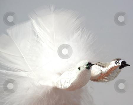 Bird decoration stock photo, Little birds for decoration of a Christmas tree by Fabio Alcini