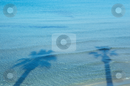 Palm tree shadows stock photo, Shadows of large palm trees on the surface of the water of the beach at Kusadasi, Turkey on the Aegean. by Sean Nel