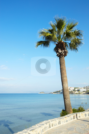Palm Tree stock photo, Tall palm tree against a clear blue sky on a sunny day by Sean Nel
