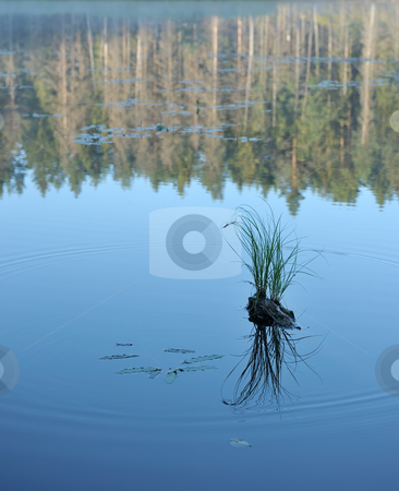 Wood lake stock photo, Landscape with lake and trees, a hummock in water. by Vladimir Blinov