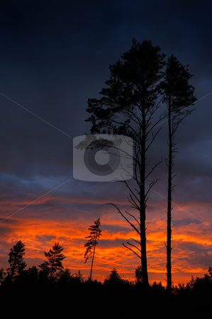 Sunset and pine stock photo, Pine in last beams of a sunset and low clouds. by Vladimir Blinov