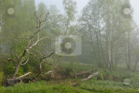 Landscape with a dry tree and the bridge. stock photo, Early morning, fog, the bridge through a stream and a dry tree on a meadow. by Vladimir Blinov