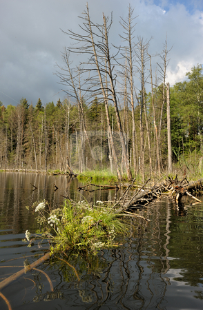 Wood lake stock photo, Landscape with lake and the trees, the flooded trunk. by Vladimir Blinov