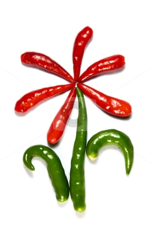 Flower from chili pepper stock photo, Flower from chili pepper isolated on white by Oleg Blazhyievskyi