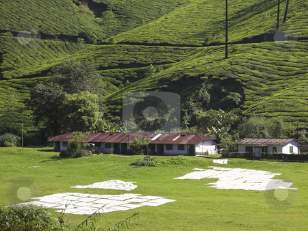 Sheets drying on a grassy slope stock photo, Sheets drying on a grassy slope with a backdrop of estate workers homes and tea covered hills by Mike Smith
