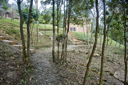 Into the forest stock photo, Track on the forest with houses and stairs. by Francisco Putini