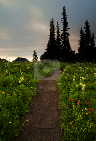 Alpine Meadown Trail stock photo, Lupine, paintbrush and Western Anenome line an alpine trail as it crosses a small meadow by Mike Dawson