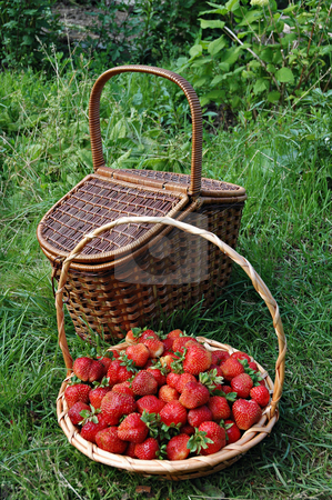 Wicker baskets filled with strawberries stock photo, Wicker baskets filled with strawberries on green grass by Olga Drozdova