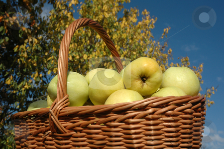 Green apples in a basket stock photo, Basket of green apples against background of blue sky by Olga Drozdova