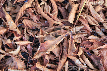 Soon autumn stock photo, Dry leaves have covered the ground in park by Valerij Kotulskij