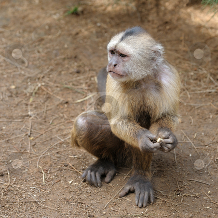 Monkey  stock photo, A monkey in a zoo, game and asking for food. by Vladimir Blinov