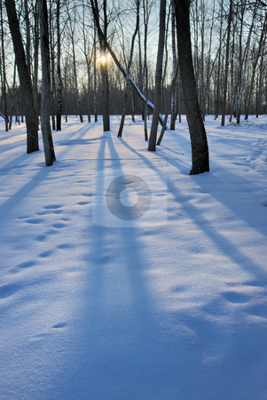 Winter sunset stock photo, The low winter sun, the blue snow and the long shadows of the trees by Vladimir Blinov