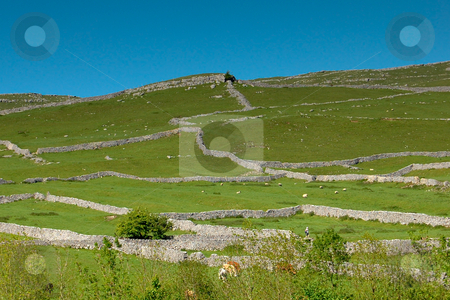 Yorkshire Dales stone walls stock photo, View of the Yorkshire Dales by Jose Eduardo Valle