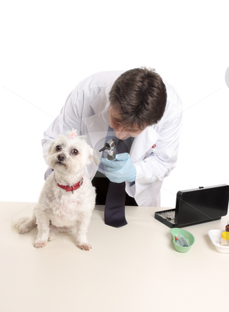 Veterinarian at work stock photo, A veterinarian begins a checkup on a dog by Leah-Anne Thompson