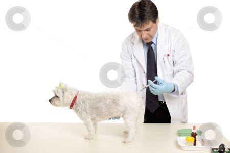 Animal receiving an injection stock photo, A vet gives a pet dog an injection.  Focus to hand and dog.  Space for copy by Leah-Anne Thompson