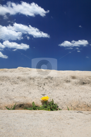 Growth in extreme environment stock photo, A beautiful plant flourishes and blooms  under extreme environmental conditions and barren terrain. by Leah-Anne Thompson