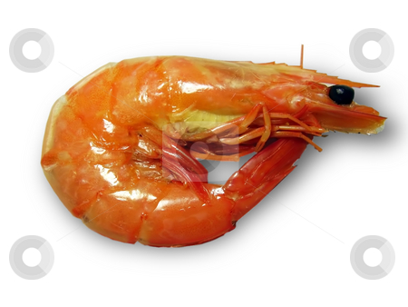 Shrimp on a white background stock photo, Shrimp on a white background by Sergey Gorodenskiy