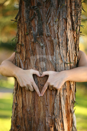 Treehugger stock photo, A nature lover environmentalist with arms wrapped around a pine tree and fingers formed in the shape of a heart. by Leah-Anne Thompson