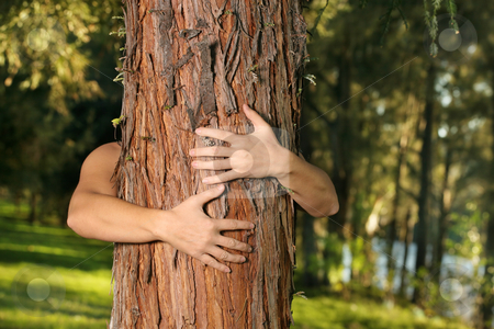 Save the trees stock photo, A treehugger conservationist with arms wrapped around a conifer. f.8 by Leah-Anne Thompson