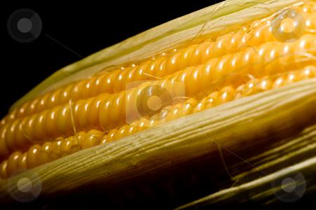Corn stock photo, Vegetable serias: golden corn over black background by Gennady Kravetsky