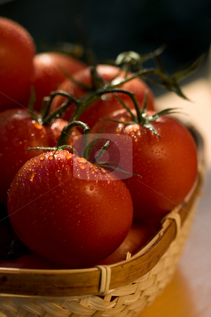 Tomato, stock photo, Food series: branch of tomato with waterdrops by Gennady Kravetsky