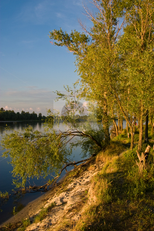 Riverside, sun day stock photo, Forest on the bank of a river from across the waterway by Gennady Kravetsky