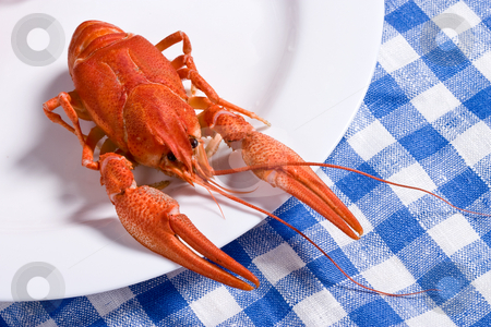 Cooked crayfish stock photo, Food series: cooked crayfish on the white plate by Gennady Kravetsky