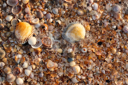 Sea shell texture stock photo, Nature series: sea shell background with water and foam by Gennady Kravetsky