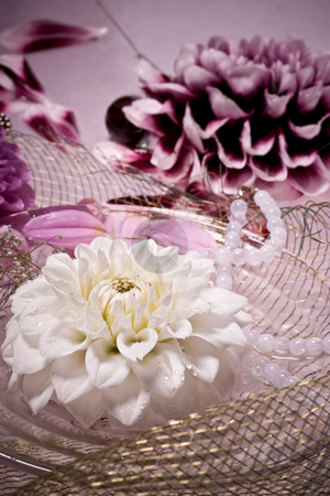 Lilac dahlia stock photo, Flower series: still life with dahlia and beads by Gennady Kravetsky
