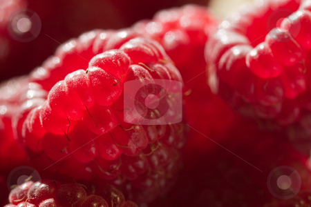 Raspberry stock photo, Food series: macro picture of fresh ripe raspberry by Gennady Kravetsky