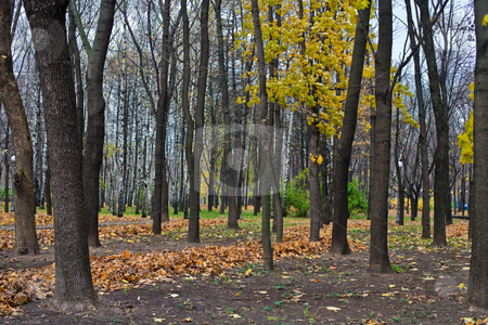 Autumn park stock photo, Nature series:  city park in autumn season by Gennady Kravetsky