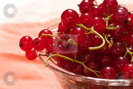 Currant  stock photo, Still life with red currant on the bow by Gennady Kravetsky