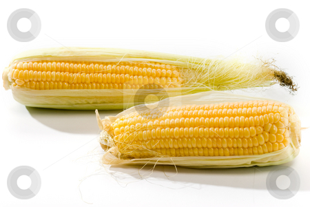 Corn stock photo, Vegetable serias: golden corn over white background by Gennady Kravetsky